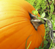 Pumpkin can serve as an aphrodisiac.